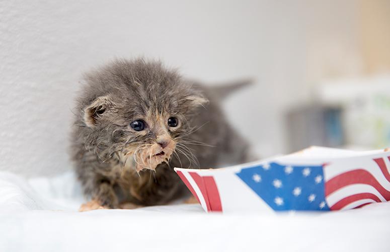 Messy kitten